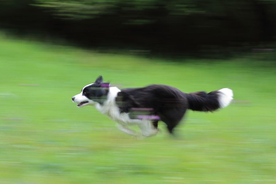 写真の撮り方アーカイブ - 「走る犬・飛ぶ犬」の撮影テクニック