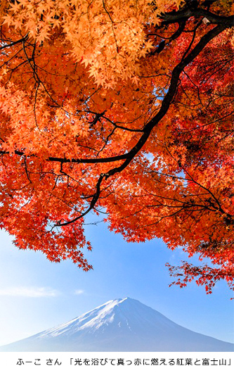 10月に撮りたい写真ベスト10 - キヤノンイメージゲートウェイ